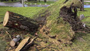 árboles destrozados en Casa de Campo tras Filomena