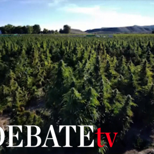 Así es la mayor plantación de marihuana de Europa que ha desmantelado la Guardia Civil en Toledo