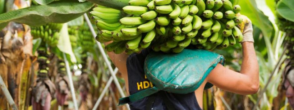 El Cabildo canario quiere ofrecer a los productores que lo han perdido todo ayudas directas